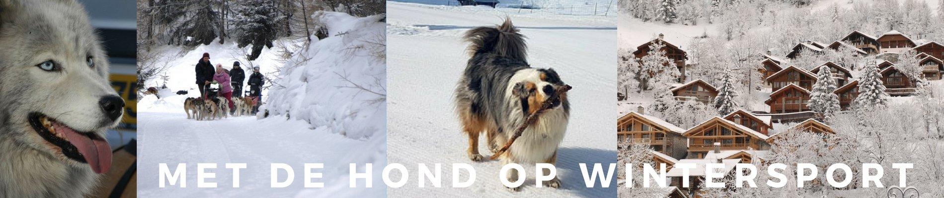 met de hond op wintersport